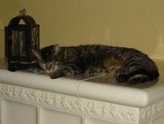 Katze macht es sich auf dem Ofen gemütlich
